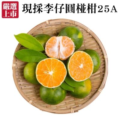 【天天果園】嚴選現採李仔圓椪柑25A 5斤