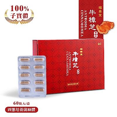 【利得監製】福蓁堂 牛樟芝固態培養菌絲體 (60顆/盒)