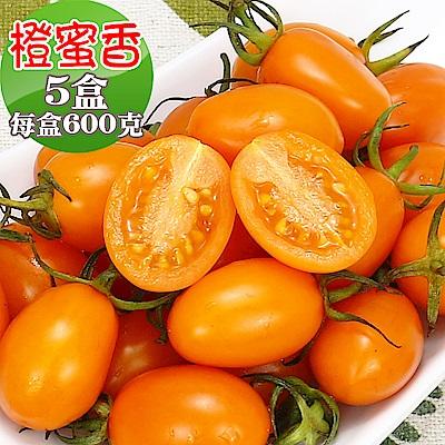 愛蜜果 橙蜜香小番茄5盒(600克/盒)