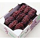 【天天果園】日本原裝島根/山梨縣珍珠葡萄2kg(13-17串)