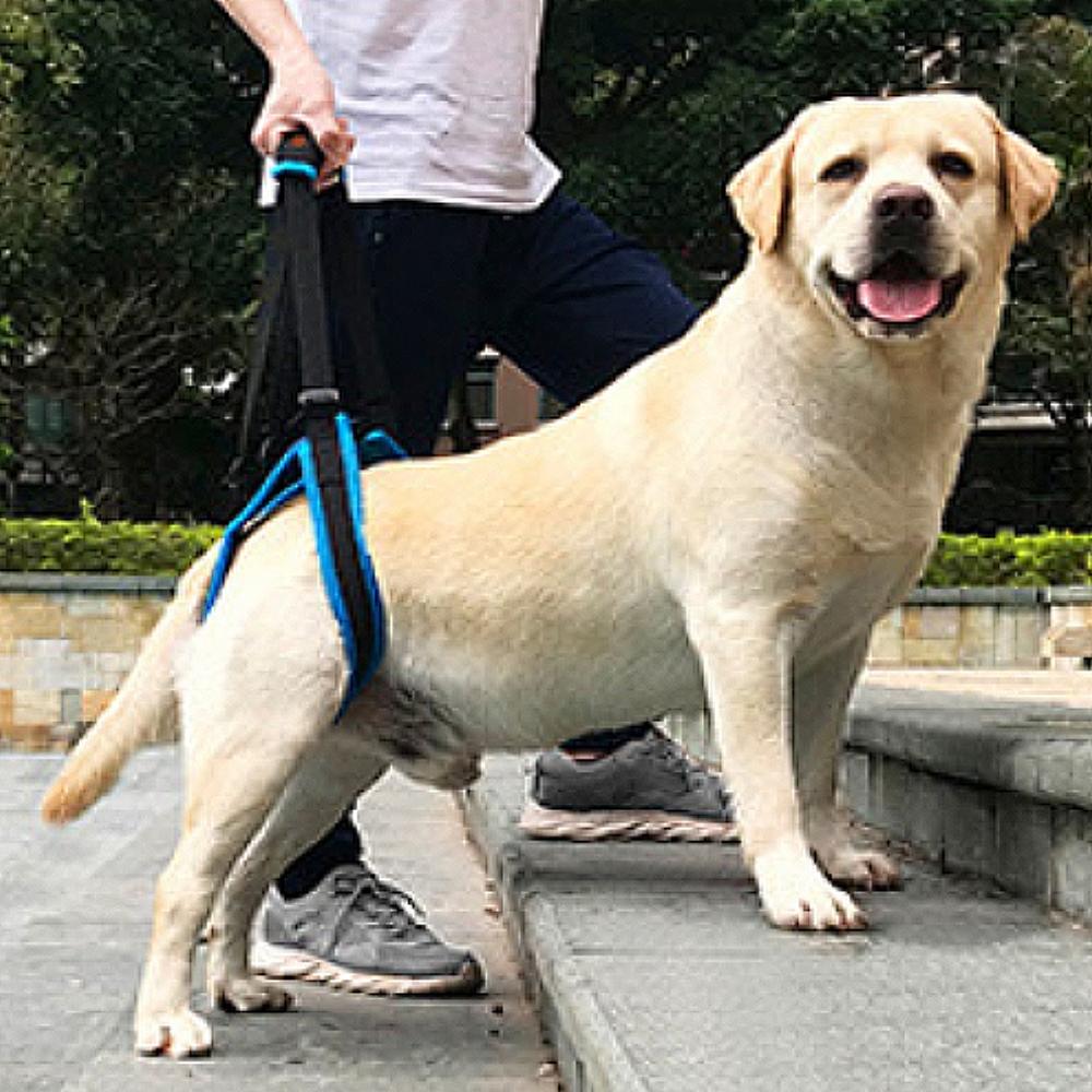 Doglemi》高齡犬步行後腿輔助帶S/M/L/XL號