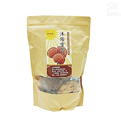 金德恩 養生食品松杉靈芝子實體/整朵靈芝1包300g/台灣製造/有機SGS認證