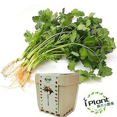 iPlant積木農場-香菜