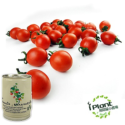 【 iPlant 】易開罐頭小農場-觀賞蕃茄