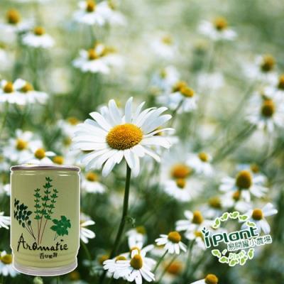 【 iPlant 】易開罐頭小農場-小雛菊