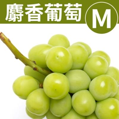 甜露露 日本夢幻麝香葡萄M- 1串入(521-590g)