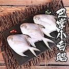 【海鮮王】巴掌小白鯧x4隻組(150g±10%/隻) (無去腮去肚)