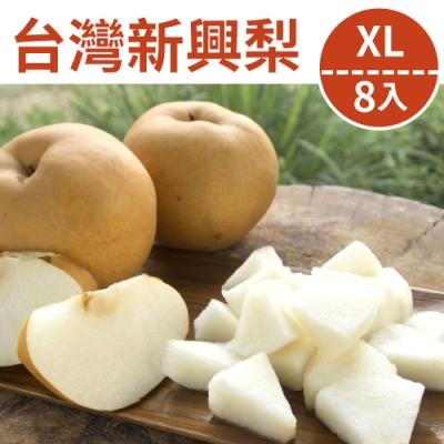 [甜露露] 新興梨XL級8入禮盒(7.5斤)