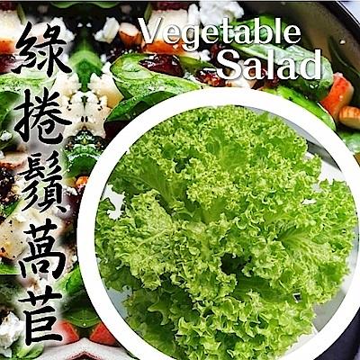 (任選12朵)【天天果園】台灣小農溫室萵苣-綠捲鬚萵苣(約120g)
