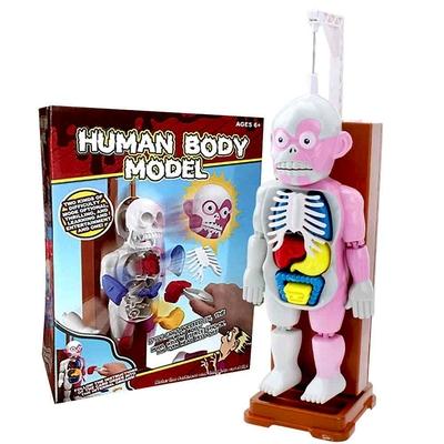 《Human Body Model》益智趣味桌遊人體模型組裝遊戲-英文版