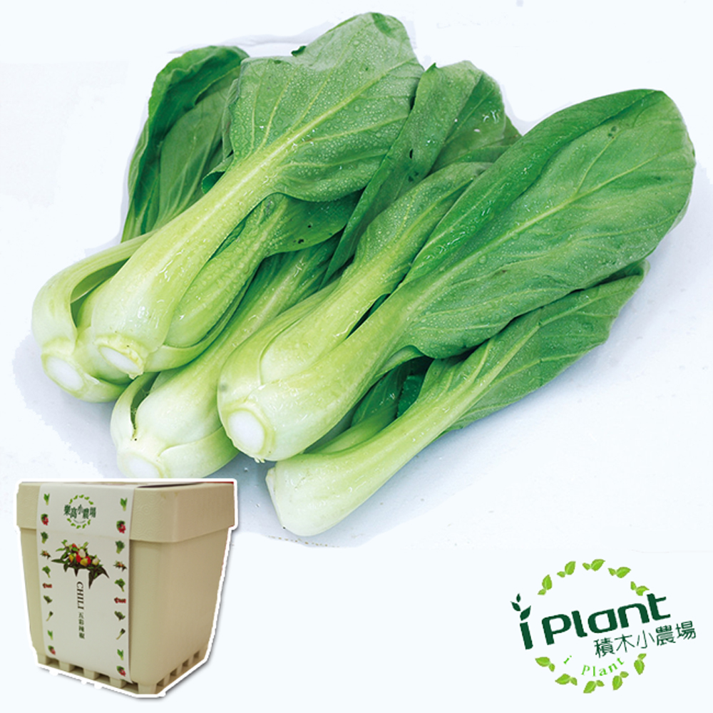 iPlant積木農場-小白菜