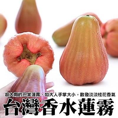 【天天果園】台灣香水蓮霧(每顆約150g) x12顆