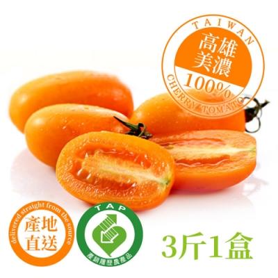 【美濃正宗】產銷履歷橙蜜香小番茄 3斤1箱(美濃橙蜜香 小番茄 產銷履歷)