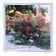 agnès b I love flower 方巾 product thumbnail 1