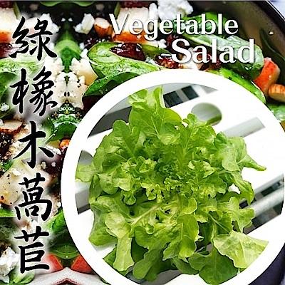 (任選12朵)【天天果園】台灣小農溫室萵苣-綠橡木萵苣(約90g)