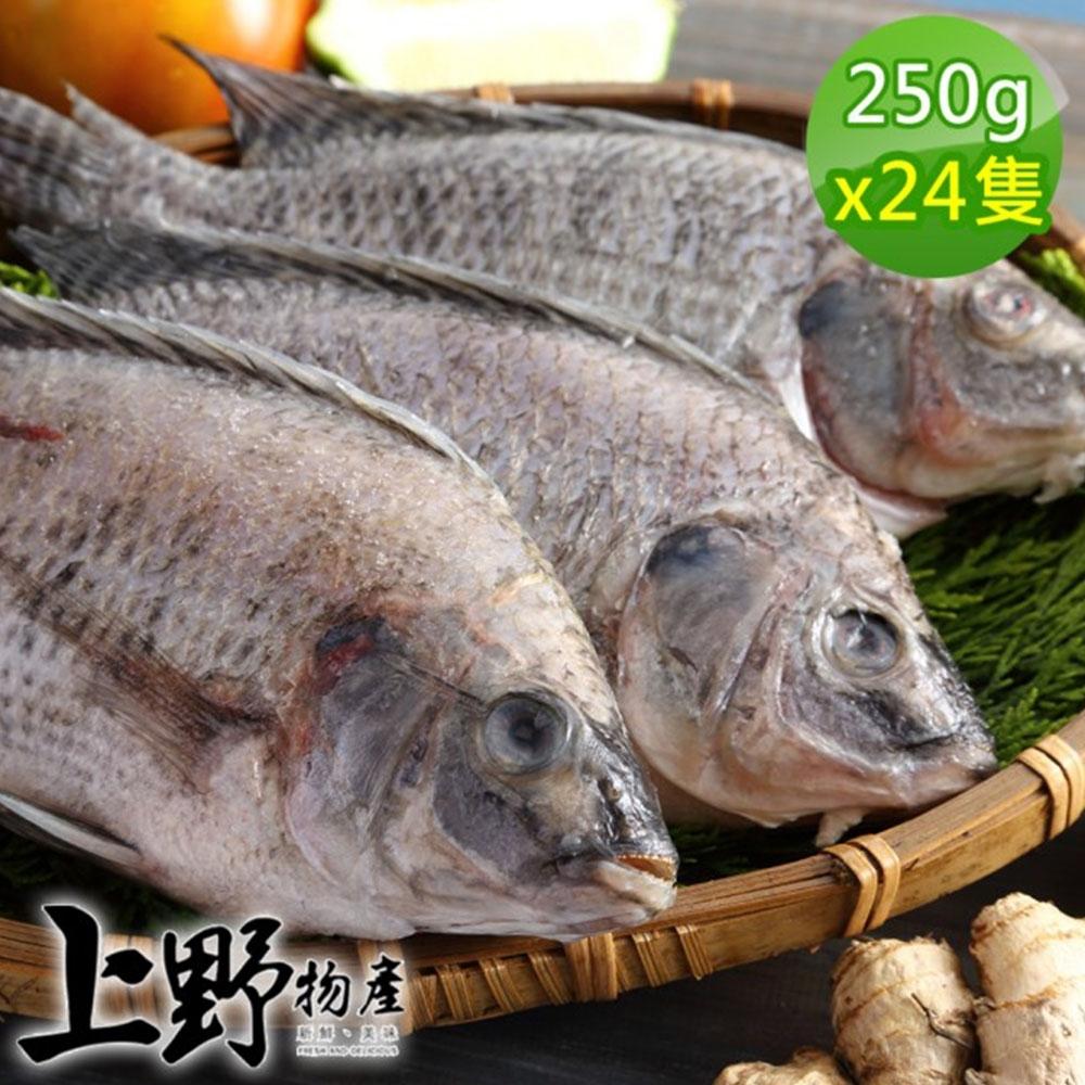 【上野物產】嚴選台灣鯛魚 (250g土10%/隻) x24隻