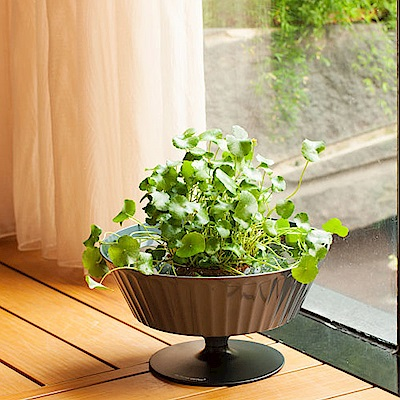 My Garden療癒植物容器 魚花共生/低腳杯-DY602