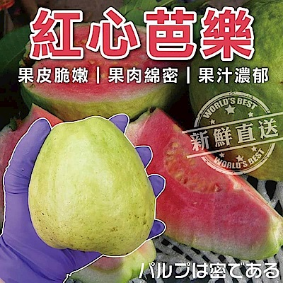 【天天果園】燕巢紅心芭樂 x5斤