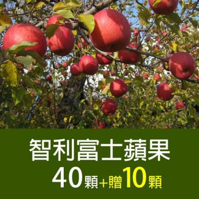 築地一番鮮-【家庭必備】智利富士蘋果40顆*1箱(加碼送10顆)