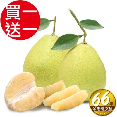買1送1台南林家 66年在地老欉麻豆文旦 產地直送(5台斤、約4-5顆)共10台斤
