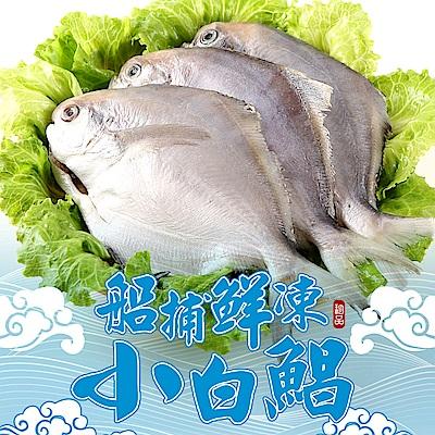 【愛上新鮮】船捕鮮凍小白鯧48隻組(4隻裝/400g±10%/包)
