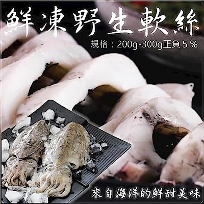 買1送1【海陸管家】鮮凍野生軟絲(每隻約200g-300g) 共2隻