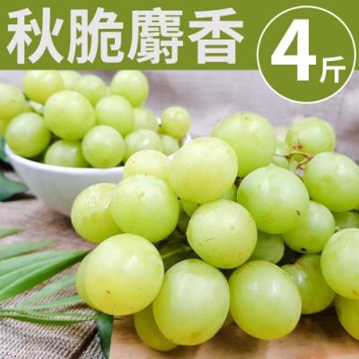 [甜露露] 酥脆~美國秋脆麝香綠無籽葡萄4斤禮盒