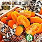 家購網嚴選 美濃橙蜜香小蕃茄 5斤/盒