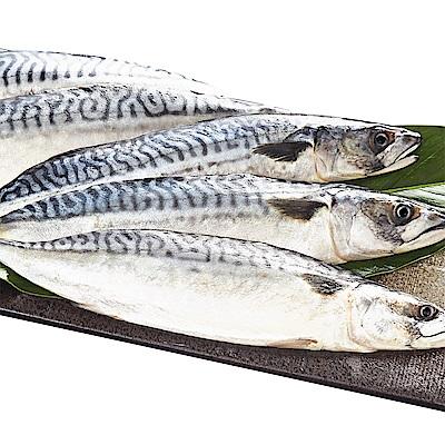 海裕屋 挪威薄鹽鯖魚禮盒(24片/4盒)