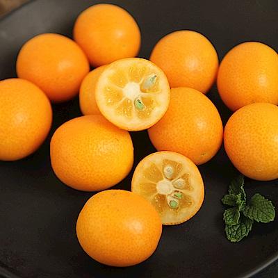 【愛上水果】日本鹿兒島溫室金柑5包(約300公克/包)