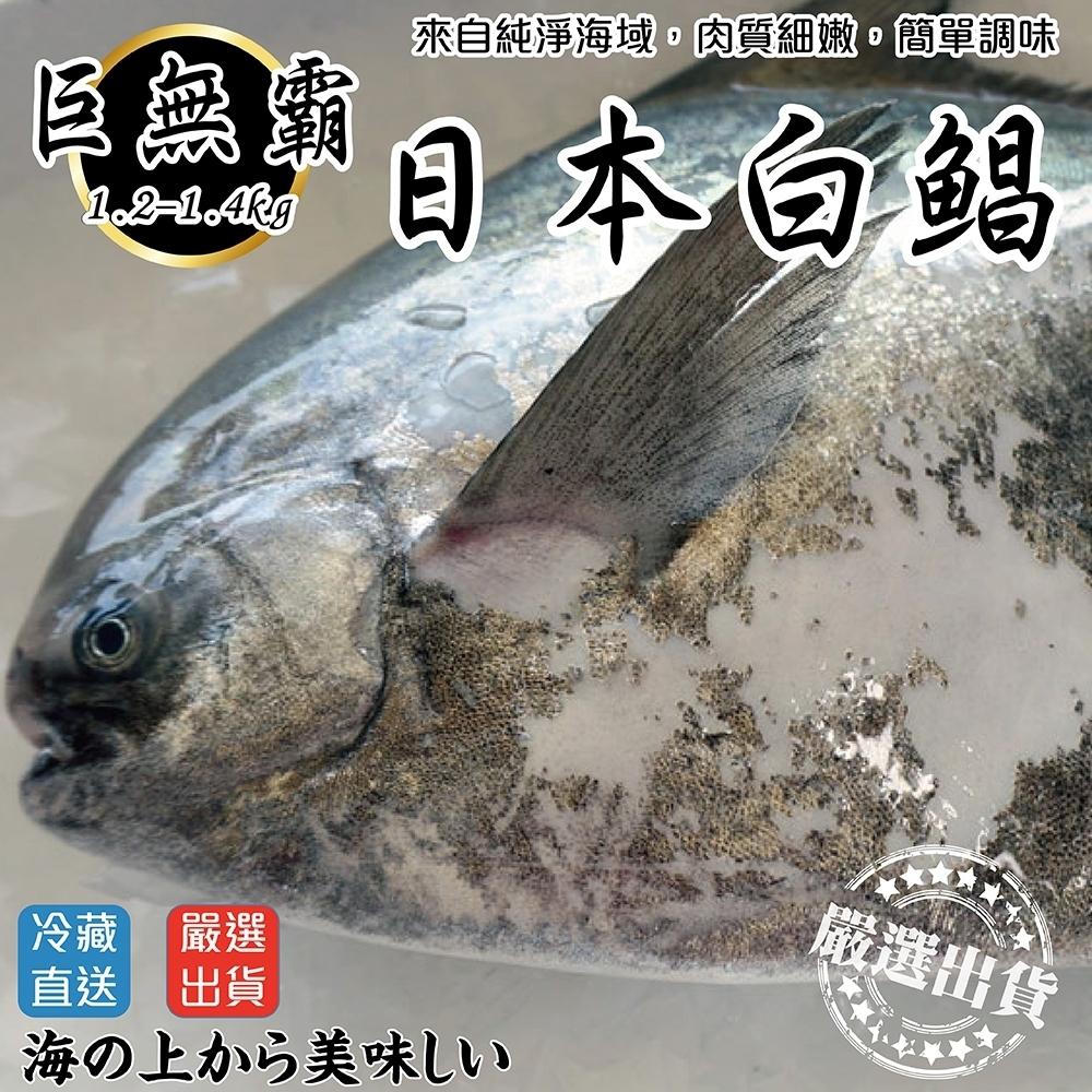 【海陸管家】日本巨無霸4XL白鯧魚(每隻約1.2kg) x1隻