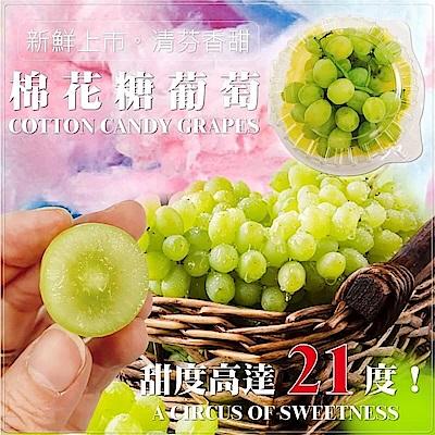 【天天果園】美國加州棉花糖葡萄(每盒約500g) x3盒