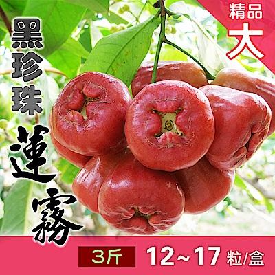 家購網嚴選 屏東枋寮黑珍珠蓮霧 3斤/盒 (約12-17粒) 精品大