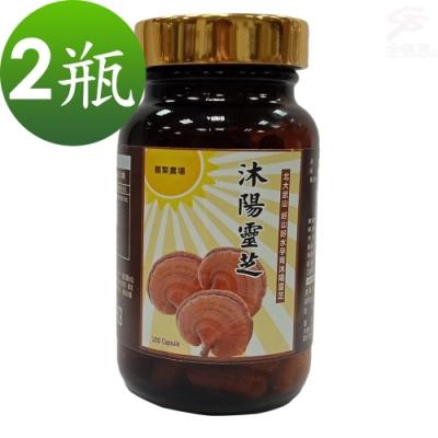 金德恩 台灣製造 2瓶SGS認證沐陽養生食品松杉破壁靈芝膠囊1瓶100粒