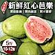 【果農直配】台農嚴選紅心芭樂5斤 x1箱 (每箱約10-12顆) product thumbnail 1