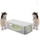 金德恩 台灣製造專利款 3D超黏力捕鼠盒2片裝/盒