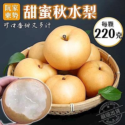 【天天果園】阮家東勢秋水梨5斤(約12-14顆)