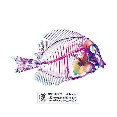 賽先生科學 解析透明魚玻璃杯墊(三款)