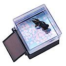 任選日本T-ARTS太陽能金魚 悠遊金魚樂 (黑出目金)_TA52342