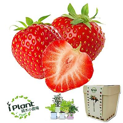 iPlant 積木農場-草莓