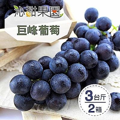 沁甜果園SSN 苗栗巨峰葡萄(3台斤/箱)(共2箱)