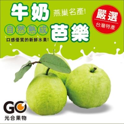 光合果物 燕巢珍珠牛奶芭樂(20顆/10斤±10%/箱)