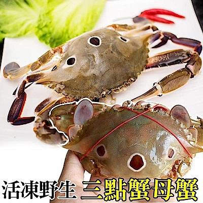 【海陸管家】活凍野生三點母蟹(每隻約175g) x10隻