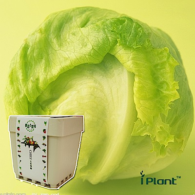 iPlant積木農場-萵苣