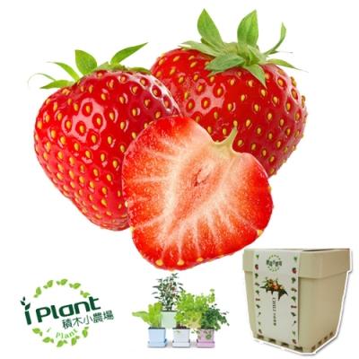 iPlant積木農場-草莓