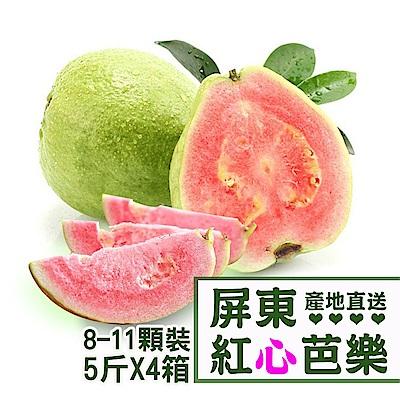 【產地直送】屏東高樹紅心芭樂5台斤X4箱(8-11顆/箱)