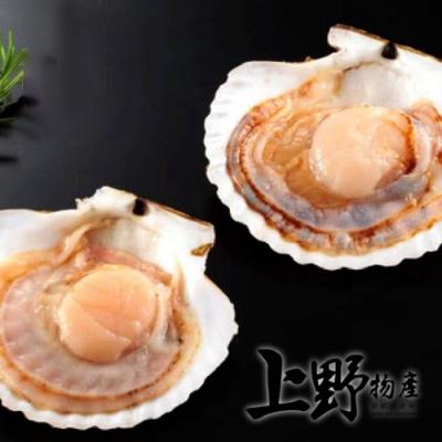 【上野物產】肥美半殼大扇貝 x10包(500g土10%/7-8個/包)