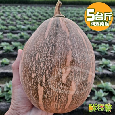 鮮採家 嚴選台灣在地阿嬌南瓜5斤1箱(約2-8顆入)
