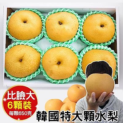 【天天果園】韓國超大顆水梨(每顆約650g) x6顆