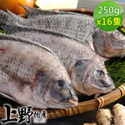 【上野物產】嚴選台灣鯛魚 (250g土10%/隻) x16隻